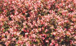 Κόκκινη πράσινη ρύθμιση λουλουδιών στοκ εικόνα