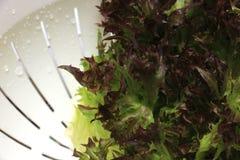 Κόκκινη σαλάτα κοραλλιών στο άσπρο πλαστικό καλάθι Στοκ Εικόνες