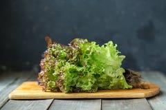 Κόκκινη σγουρή σαλάτα σε έναν ξύλινο πίνακα Στοκ Φωτογραφία