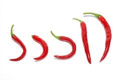κόκκινη σειρά πιπεριών τσίλ&i Στοκ φωτογραφία με δικαίωμα ελεύθερης χρήσης
