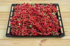 Κόκκινη σταφίδα στον καφετή ξύλινο πίνακα Στοκ φωτογραφία με δικαίωμα ελεύθερης χρήσης