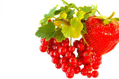Κόκκινη σταφίδα με τη φράουλα που απομονώνεται στο άσπρο υπόβαθρο, κόκκινη φυσική φράουλα, υγιή τρόφιμα Στοκ Εικόνες