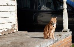 Κόκκινη συνεδρίαση γατών πιπεροριζών τιγρέ σε ένα συγκεκριμένο μέρος του ξεπερασμένου σπιτιού με ένα μαύρο αυτοκίνητο στο υπόβαθρ στοκ φωτογραφίες με δικαίωμα ελεύθερης χρήσης