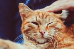 Κόκκινη συνεδρίαση γατών σε ετοιμότητα του Στοκ φωτογραφίες με δικαίωμα ελεύθερης χρήσης