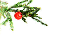 Κόκκινη σφαίρα στον κλάδο eleovoy νέο έτος Χριστουγέννων Στοκ εικόνες με δικαίωμα ελεύθερης χρήσης