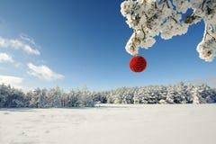 Κόκκινη σφαίρα Χριστουγέννων σε έναν χιονισμένο κλάδο δέντρων Στοκ Φωτογραφίες