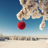 Κόκκινη σφαίρα Χριστουγέννων σε έναν χιονισμένο κλάδο δέντρων Στοκ Εικόνες