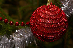 Κόκκινη σφαίρα Χριστουγέννων στην κινηματογράφηση σε πρώτο πλάνο δέντρων Στοκ εικόνα με δικαίωμα ελεύθερης χρήσης