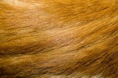 Κόκκινη σύσταση γουνών γατών Στοκ φωτογραφία με δικαίωμα ελεύθερης χρήσης