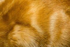 Κόκκινη σύσταση γουνών γατών Στοκ Εικόνα