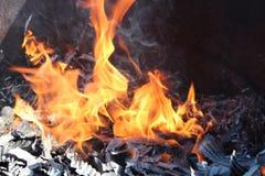 Κόκκινη τέφρα πυρκαγιάς στοκ εικόνες