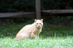 Κόκκινη τιγρέ γάτα Στοκ φωτογραφίες με δικαίωμα ελεύθερης χρήσης