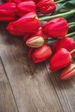 Κόκκινη τουλίπα Τουλίπες φως λουλουδιών ανασκόπησης playnig Έννοια φωτογραφιών λουλουδιών Έννοια φωτογραφιών διακοπών Copyspace Στοκ φωτογραφία με δικαίωμα ελεύθερης χρήσης