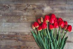 Κόκκινη τουλίπα Τουλίπες φως λουλουδιών ανασκόπησης playnig Έννοια φωτογραφιών λουλουδιών Έννοια φωτογραφιών διακοπών Copyspace Στοκ Φωτογραφίες