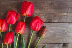Κόκκινη τουλίπα Τουλίπες φως λουλουδιών ανασκόπησης playnig Έννοια φωτογραφιών λουλουδιών Έννοια φωτογραφιών διακοπών Copyspace Στοκ Εικόνες