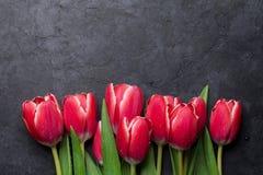 κόκκινη τουλίπα 01 Στοκ εικόνα με δικαίωμα ελεύθερης χρήσης