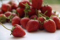 Κόκκινη φράουλα μούρων στο άσπρο υπόβαθρο Στοκ φωτογραφίες με δικαίωμα ελεύθερης χρήσης