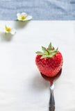 Κόκκινη φράουλα Στοκ εικόνες με δικαίωμα ελεύθερης χρήσης