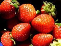 κόκκινη φράουλα Στοκ Εικόνα
