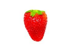 Κόκκινη φράουλα μούρων που απομονώνεται σε ένα άσπρο υπόβαθρο Στοκ εικόνα με δικαίωμα ελεύθερης χρήσης