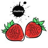 Κόκκινη φράουλα μούρων Στοκ εικόνα με δικαίωμα ελεύθερης χρήσης