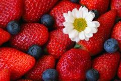 Κόκκινη φράουλα, υπόβαθρο βακκινίων Στοκ Εικόνα