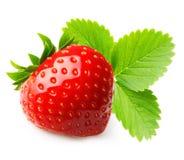 κόκκινη φράουλα φύσης λεπτομερειών μούρων Στοκ φωτογραφίες με δικαίωμα ελεύθερης χρήσης