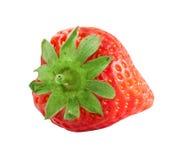 κόκκινη φράουλα φύσης λεπτομερειών μούρων Στοκ Εικόνες