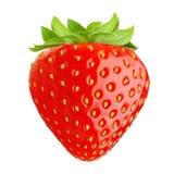 κόκκινη φράουλα φύσης λεπτομερειών μούρων Στοκ Εικόνα