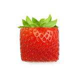 κόκκινη φράουλα φύσης λεπτομερειών μούρων Στοκ Φωτογραφίες