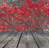 Κόκκινη φύλλων δέντρων φύση εποχής υποβάθρου φθινοπώρου δασική με το ξύλο Στοκ εικόνες με δικαίωμα ελεύθερης χρήσης