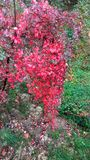 Κόκκινη φύση Στοκ Εικόνες