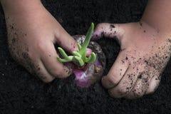 Κόκκινη φύτευση κρεμμυδιών χεριών παιδιού Στοκ Φωτογραφία