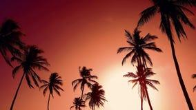 Κόκκινη χαραυγή στον ουρανό Καταπληκτικοί φοίνικες και κίτρινος ήλιος απόθεμα βίντεο