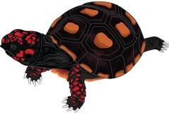 Κόκκινη χελώνα ποδιών Στοκ εικόνες με δικαίωμα ελεύθερης χρήσης