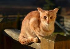 Κόκκινη tom γάτα με ένα κατάπληκτο πρόσωπο Στοκ Εικόνες