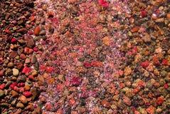κόκκινοι βράχοι αστακών π&alpha Στοκ φωτογραφία με δικαίωμα ελεύθερης χρήσης