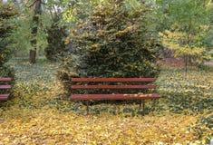 Κόκκινοι ξύλινοι πάγκοι στο βοτανικό κήπο του dendrological νομού Arad πάρκων Macea - Ρουμανία Στοκ Εικόνες
