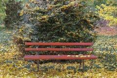 Κόκκινοι ξύλινοι πάγκοι στο βοτανικό κήπο του dendrological νομού Arad πάρκων Macea - Ρουμανία Στοκ Φωτογραφία
