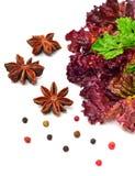 Κόκκινοι σγουροί μαρούλι, μαϊντανός και anisetree Στοκ Εικόνα