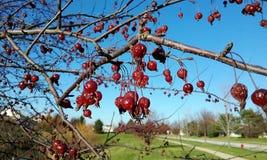 Κόκκινοι σπόροι μούρων Στοκ φωτογραφία με δικαίωμα ελεύθερης χρήσης