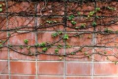 κόκκινοι τοίχοι τούβλο&upsilo Στοκ Εικόνες