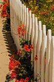 Κόκκινος άσπρος φράκτης λουλουδιών Στοκ Εικόνα