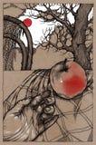 Κόκκινος ήλιος, κόκκινο Appe Στοκ Εικόνες