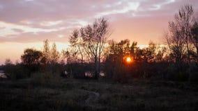Κόκκινος ήλιος στο ηλιοβασίλεμα μέσω των δέντρων φιλμ μικρού μήκους