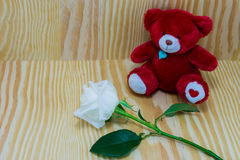 Κόκκινος αντέξτε με το άσπρο λουλούδι τριαντάφυλλων της αγάπης Στοκ Εικόνα
