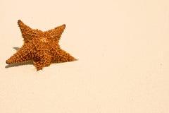κόκκινος αστερίας άμμου &p Στοκ φωτογραφίες με δικαίωμα ελεύθερης χρήσης
