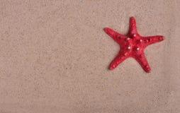 Κόκκινος αστερίας στη ρηχή κινηματογράφηση σε πρώτο πλάνο άμμου θάλασσας Στοκ Εικόνα