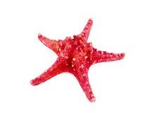 κόκκινος αστερίας Στοκ Εικόνες
