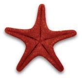 κόκκινος αστερίας Στοκ Φωτογραφία